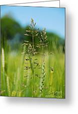 Grass Greeting Card