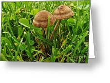 Grass Mushroom Pair           Tubaria Fungii           May           Indiana Greeting Card