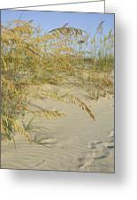 Grass On The Beach Sand Greeting Card