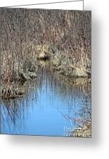 Grass Reflections Greeting Card