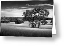 Grass Safari-bw Greeting Card