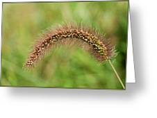 Grass Seed Greeting Card