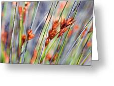 Grass Seeds Greeting Card