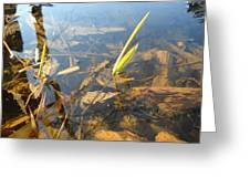 Grass Spears In Still Water Greeting Card