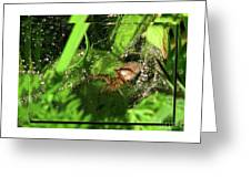 Grass Spider Greeting Card