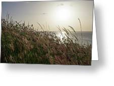 Grass Wave Greeting Card
