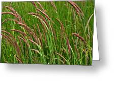 Grass3 Greeting Card