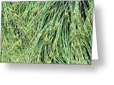 Grasses 4 Greeting Card
