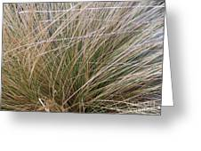 Grasses 5 Greeting Card