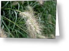 Grasses 6 Greeting Card