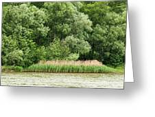 Grasses And Trees Greeting Card