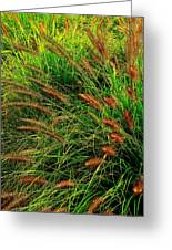 Grasses In The Verticle Greeting Card