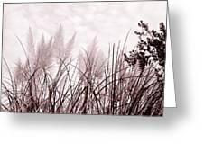 Grasses Greeting Card