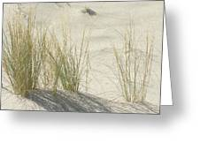 Grasses On The Beach Greeting Card