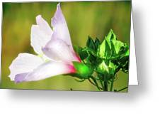 Grasshopper And Flower Greeting Card