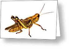 Grasshopper I Greeting Card by Gary Adkins