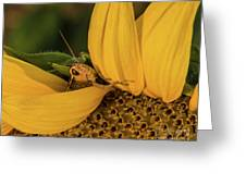 Grasshopper In Sunflower Greeting Card