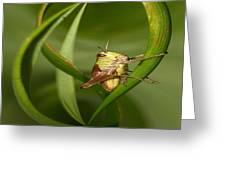 Grasshopper Twist Greeting Card