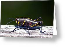 Grasshopper Nymph Greeting Card