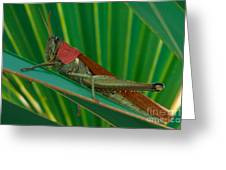 Grasshopper On Palm Leaf Greeting Card