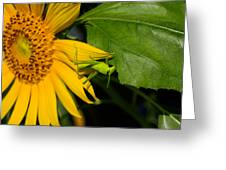 Grasshopper On Sunflower Greeting Card