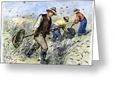 Grasshopper Plague, 1888 Greeting Card