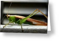 Grasshopper Posing Greeting Card