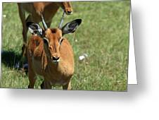 Grassland Deer Greeting Card