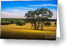 Grassland Safari Greeting Card