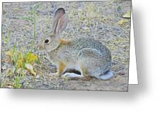 Grassland Youngster Greeting Card