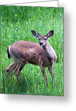 Grassy Doe Greeting Card