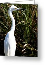 Grassy Egret Greeting Card
