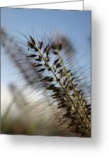 Grassy Greeting Card