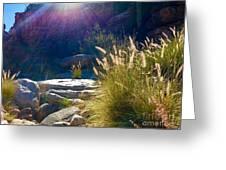 Grassy Sun Rays Greeting Card