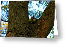 Grateful Tree Squirrel Greeting Card