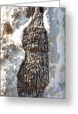 Gray Bark Abstract Greeting Card