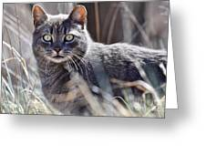 Gray Cat In Woods Greeting Card
