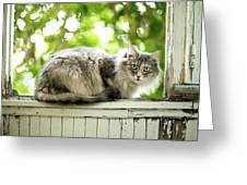 Gray Cat Sitting On A Balcony Greeting Card