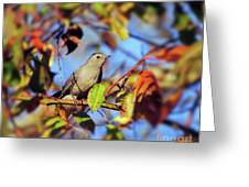 Gray Catbird Framed By Fall Greeting Card