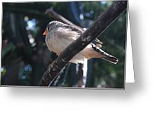 Gray Crowned Rosy Finch   Greeting Card