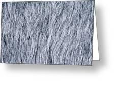 Gray Fake Fur Horizontal Greeting Card