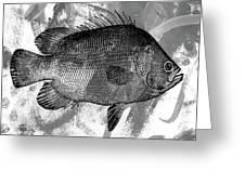 Gray Fish Greeting Card