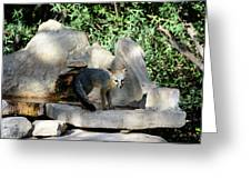 Gray Fox 4 Greeting Card