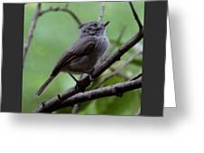 Gray Grey Bird 052814a Greeting Card