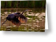 Gray Heron Greeting Card