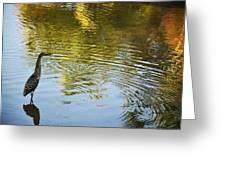 Gray Heron  Greeting Card
