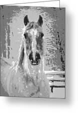 Gray Horse Greeting Card