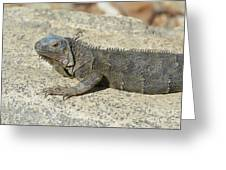 Gray Iguana With Long Talons Sitting On A Rock Greeting Card