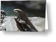 Gray Iguana With Spines Along His Back On A Rock Greeting Card