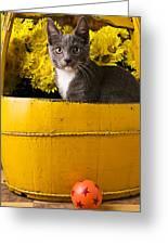 Gray Kitten In Yellow Bucket Greeting Card